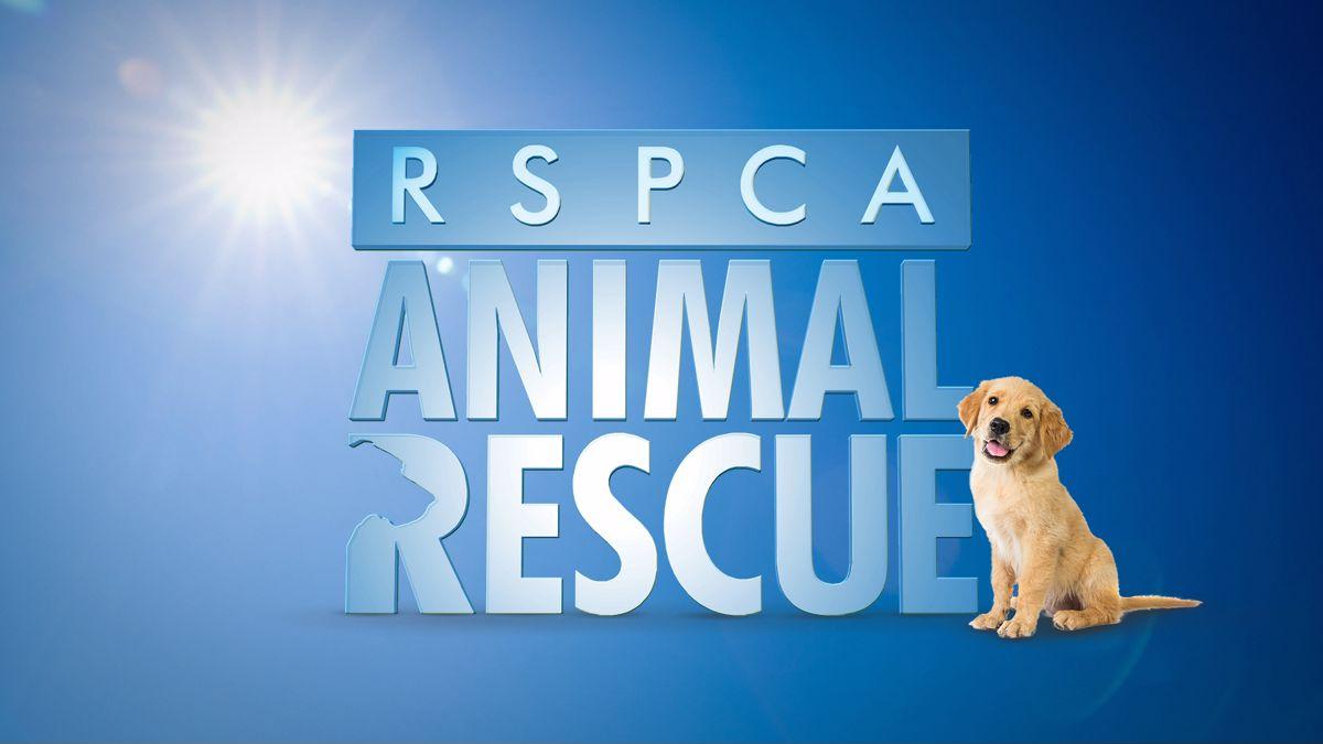 RSPCA Animal Rescue   7plus